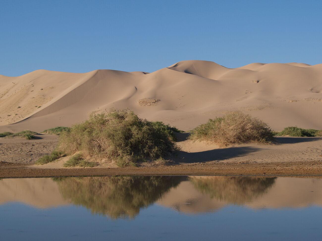 Sand Dunes Khongoryn Els sand dun...