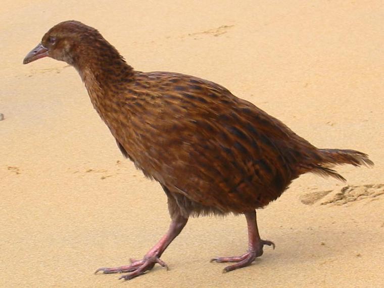 الحيوانات المهدده بالانقراض في العالم 1289c-weka